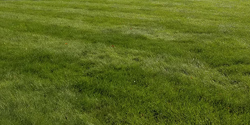 Lawn Care Amp Maintenance Services St Cloud Amp Sartell Mn