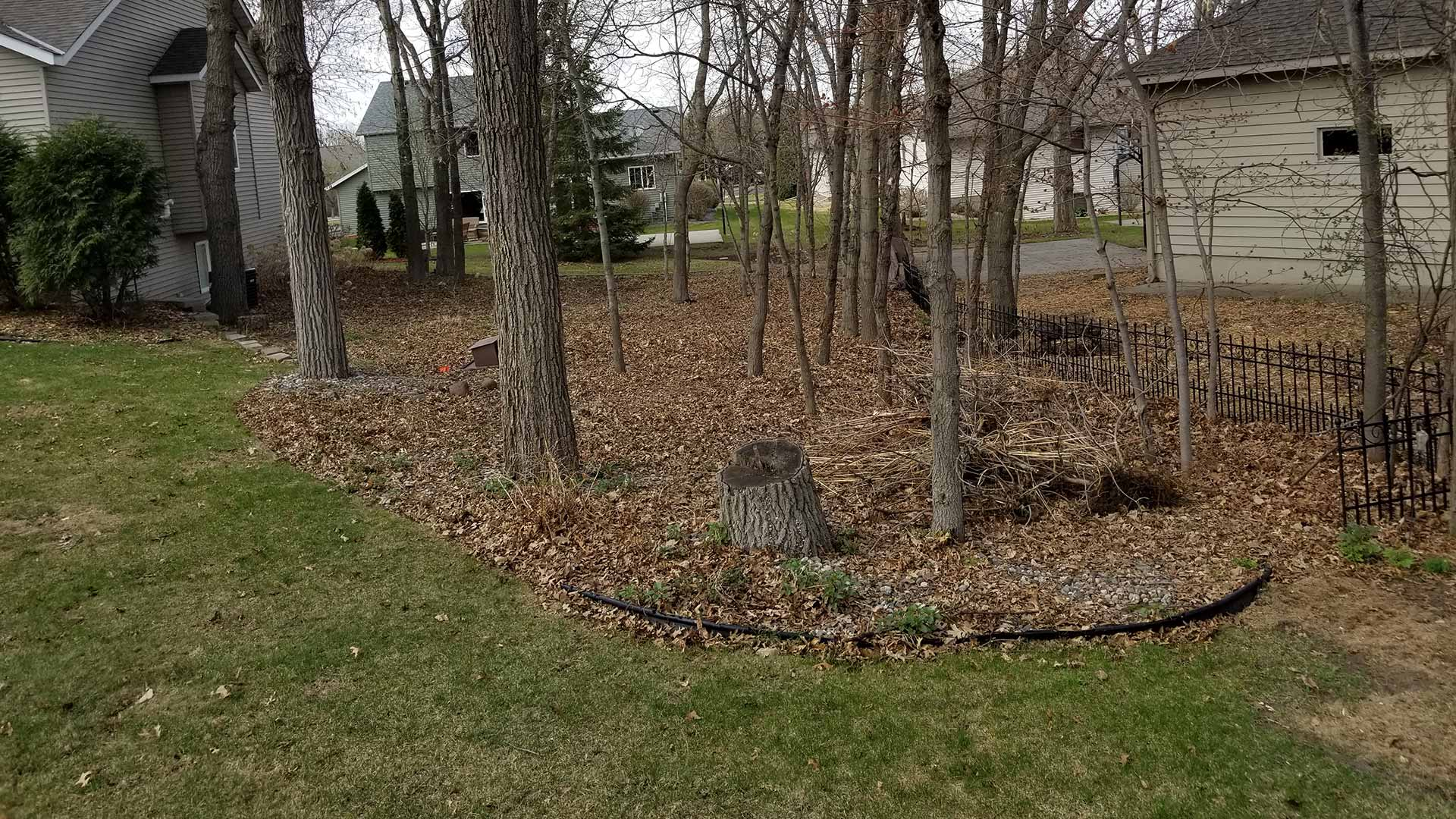 Residential yard before a fall clean up in Sauk Rapids, MN.