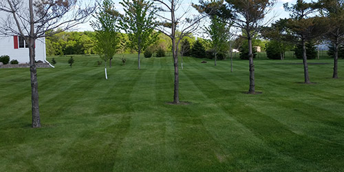 Lawn mowing service with stripes for homeowner in St. Cloud, MN.