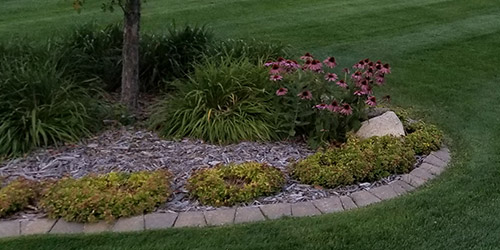 New mulch installed in a landscape bed.