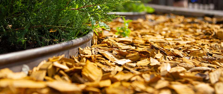 What Mulch Provides That You Don't Realize