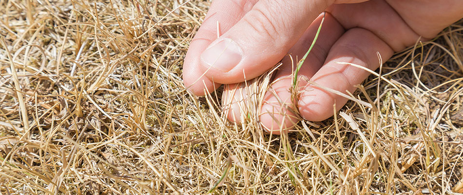 5 Ways You're Accidentally Killing Your Lawn