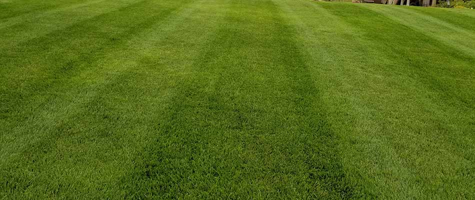 Most Important Early-Spring Tasks for Your Lawn & Landscape