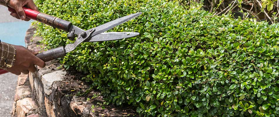 4 Must-Know Tips for Trimming & Pruning Your Hedges This Year
