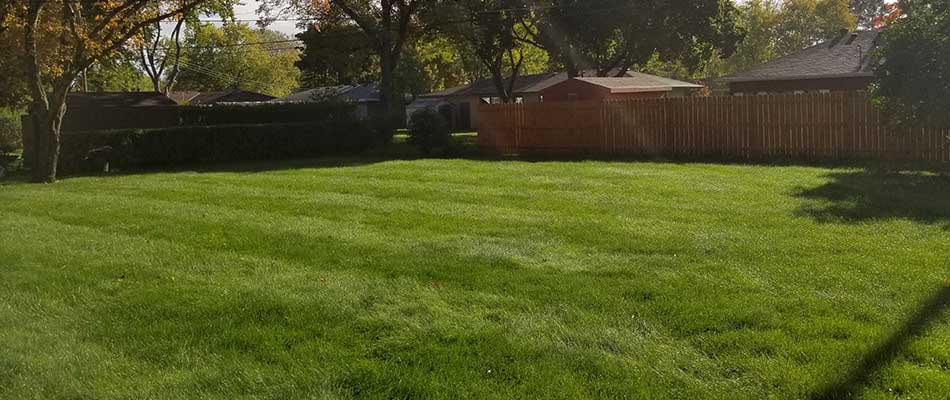 Maintained residential lawn in Waite Park, MN.