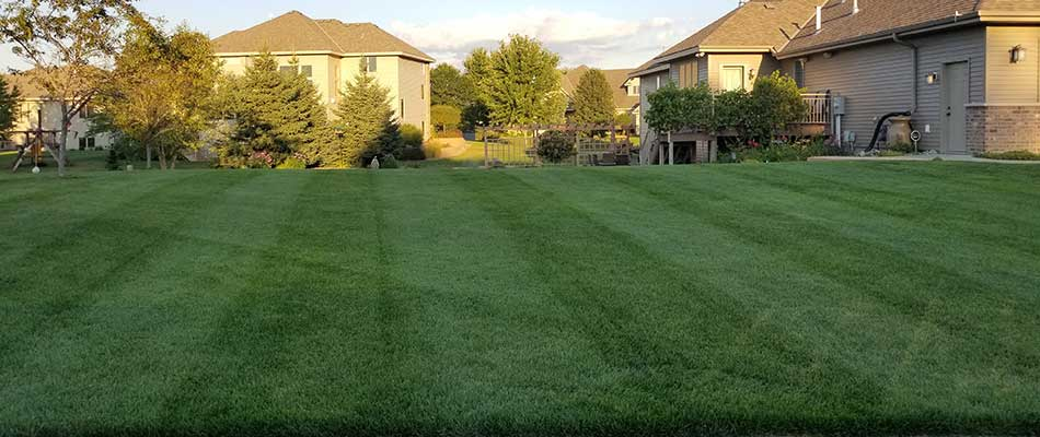 How to Get Your Lawn Prepared for 2020