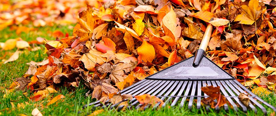How Removing Leaves in Fall Helps Your Lawn Thrive
