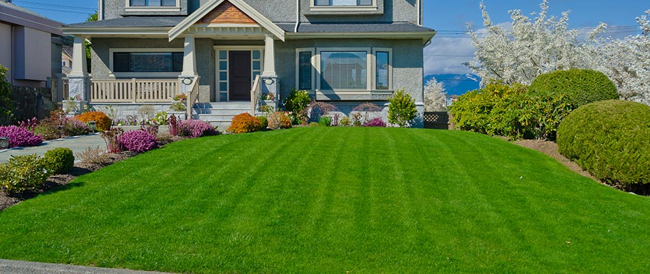 Recently fertilized lawn in Sartell, MN.